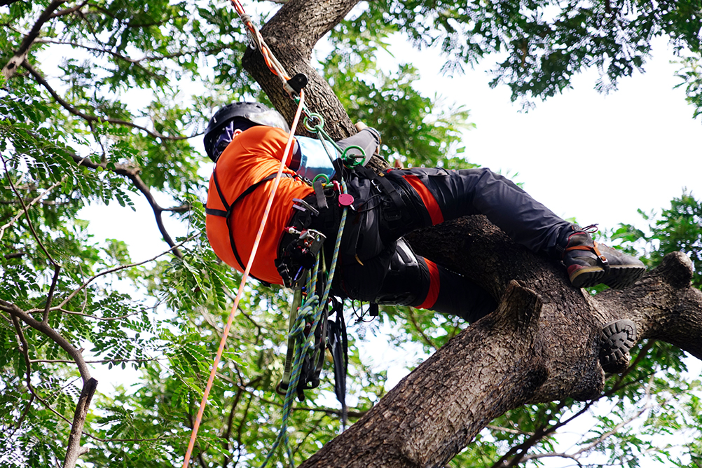 Tree Surgeons in West Sussex and Midhurst